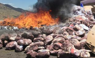 کشف و ضبط بیش از ۱۲ تن مواد غذایی فاسد در کرمانشاه