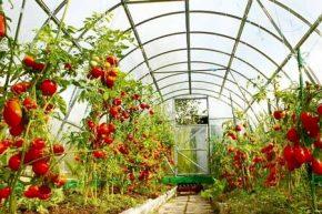 ۵۱۷ طرح کشاورزی برای دریافت تسهیلات پیش پذیرش شدند