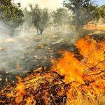 سه هکتار از مراتع جنگلی گیلانغرب در آتش سوخت