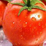 آیا رگه های سفید گوجه فرنگی مضر است؟