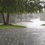 میانگین بارش باران در استان کرمانشاه به ۴۸۱ میلی متر رسید