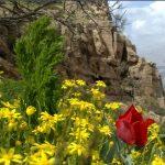 طبیعت زیبای کفراور-گیلانغرب -عکاس:همایون رشیدی