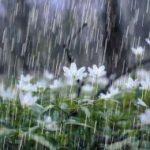 آسمان کرمانشاه بارانی میشود