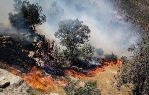عاملان آتشسوزی منابع طبیعی در کرمانشاه باید مجازات شوند