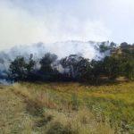 مهار آتش سوزی جنگل های شمالی اسلام آبادغرب+تصاویر