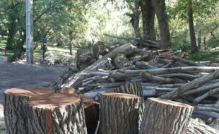 قتل عام جنگلهای غرب کشور/ غارت خاموش سرمایههای ملی