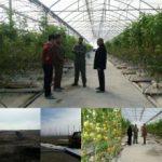توسعه کشت گلخانه ای گامی در راستای تحقق اقتصاد مقاومتی در اسلام آبادغرب