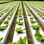ضریب خودکفایی کشور در حوزه تولیدات کشاورزی به ۸۲ درصد رسیده است؛ بهرهبرداری از ۹۰ پروژه کشاورزی در دهه فجر