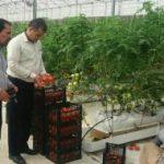 توسعه گلخانهها در دشتهای ممنوعه اسلامآبادغرب