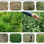 خسارت بیش از ۳۷ میلیارد ریالی تگرگ به زیر بخش کشاورزی اسلام آبادغرب/خسارت ۴ هزار هکتار از مزارع شهرستان