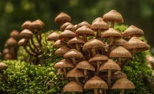 مسمومیت ۱۶ کرمانشاهی با قارچ های سمی