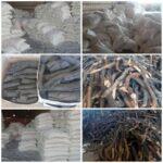 درخواست اشد مجازات برای نابودگران جنگل های بلوط در اسلام آبادغرب